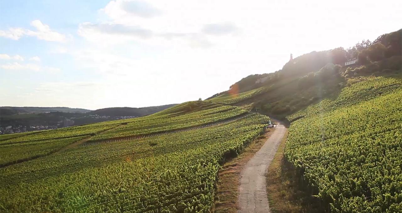 Hos vinproducenten Leitz