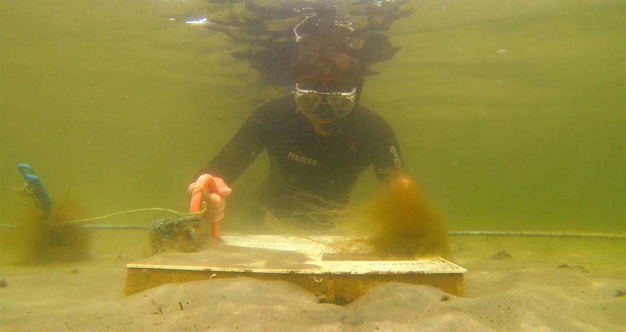 Snorkeläventyr i Kosterhavet