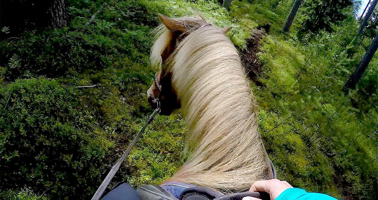 Islandshäst