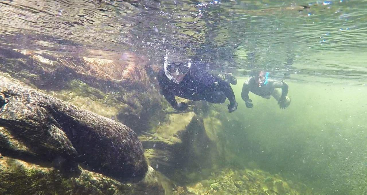 Fjällsnorkling i Västerbotten