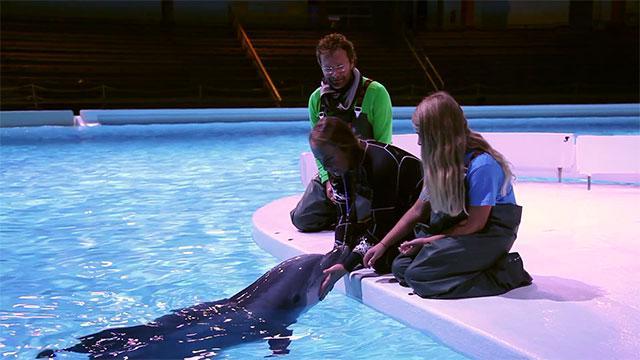 Delfin Kolmården
